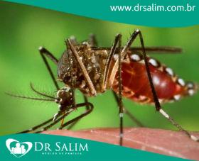 Presidente Dilma Rousseff comete gafes ao falar do Aedes aegypti
