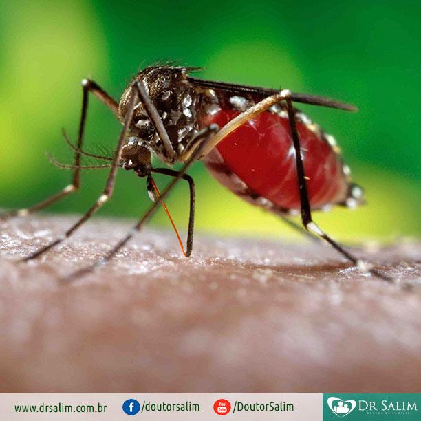 O que o Zika Vírus pode causar ao seu organismo?